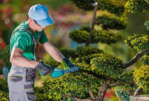 Seguro de Responsabilidad Civil jardineria
