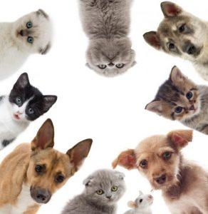 Seguro de Responsabilidad Civil Guardería de animales
